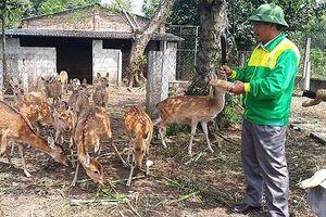 Hà Tĩnh: Đề nghị đưa hươu sao ra khỏi danh mục động vật rừng thông thường