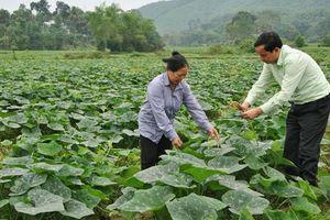 Tái cơ cấu nông nghiệp hiệu quả kém, phần lớn do người đứng đầu ngành
