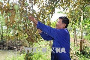 Tăng năng suất, chất lượng nông sản Việt từ mô hình liên kết trực tiếp