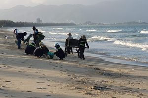 Kiểm tra nguyên nhân cá chết dạt vào bờ biển Đà Nẵng