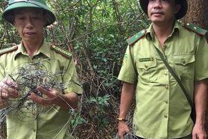 Kinh hãi dày đặc hơn 300 bẫy 'tận diệt' thú rừng trên núi