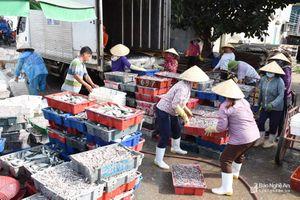 Ngư dân Nghệ An trúng đậm cá trỏng