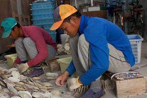 'Cơn khát' lao động nước ngoài tại Nhật Bản