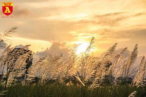 Hà Nội mùa hoa cỏ lau