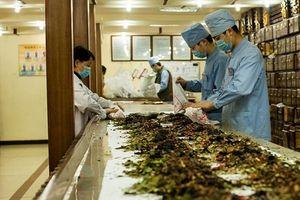 Việt Nam không có thuốc đông y làm từ thịt người