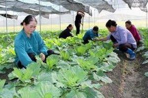 Mưa trên diện rộng ở Bắc Bộ giúp cây trồng sinh trưởng tốt