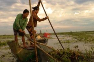 'Săn' lươn đồng cuối mùa nước nổi