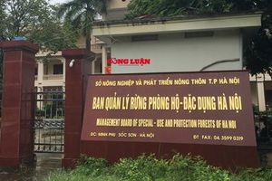 Hà Nội cần truy trách nhiệm của lãnh đạo, cán bộ Ban quản lý rừng Phòng hộ - Đặc dụng Hà Nội