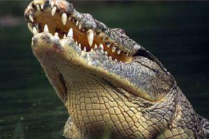 Cá sấu Gustave, dã thú ăn thịt nhiều người nhất ở thời hiện đại