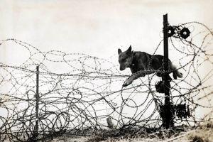 Những 'chiến binh' đặc biệt trong Thế chiến I