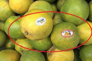 Mập mờ tem trái cây: Nhập nhèm xuất xứ, lừa dối khách hàng