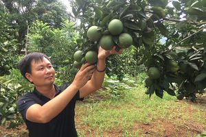 Sơn La: Đẩy mạnh sản xuất, chế biến và xuất khẩu nông sản