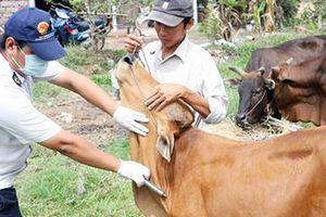 Sản xuất thành công vaccine phòng bệnh lở mồm long móng ở gia súc