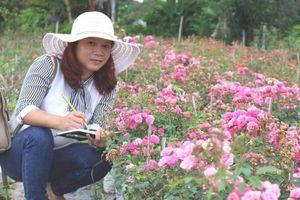 Trà hoa hồng nguyên bông 10 triệu đồng/kg vẫn hút khách
