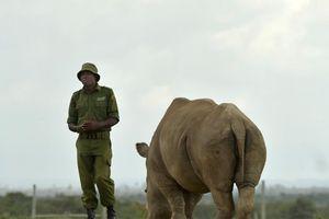 TQ nới lệnh cấm buôn bán động vật hoang dã và 'mặt tối con người'