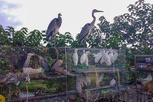 Chợ chim hoang dã ngay sát nách đại lộ Thăng Long