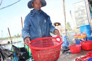 Quảng Nam: Gần 10 vạn con tôm ở 3 hồ nuôi nghi bị đầu độc chết hàng loạt