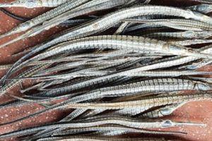 Dân đánh bắt cá lìm kìm cả đêm vì có tin thương lái Trung Quốc mua