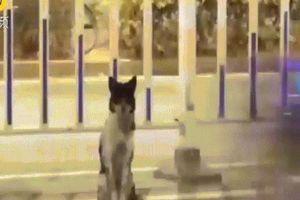 Chú chó ngồi ven đường đợi chủ đã chết hơn 80 ngày ở Trung Quốc