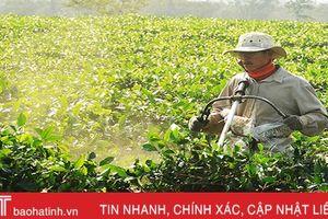 Hương Trà thay mới những đồi chè để tăng năng suất, sản lượng