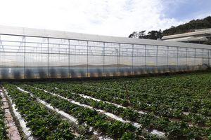 Xây dựng thể chế để nông nghiệp 4.0 đột phá, bền vững