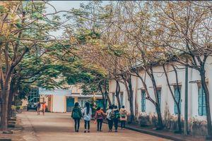 Xuất hiện ngôi trường ĐH ở Đà Nẵng cứ tới mùa Thu lại 'biến hình' thành bức tranh đẹp lộng lẫy tưởng chỉ có ở trời Tây