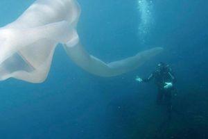 Giun biển 'quái vật' dài 8 m khiến thợ lặn choáng váng