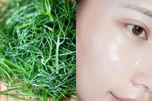 Chuyên gia khuyên phụ nữ nên thêm 5 loại thảo dược quen thuộc này vào quy trình làm đẹp, chăm sóc da mỗi ngày