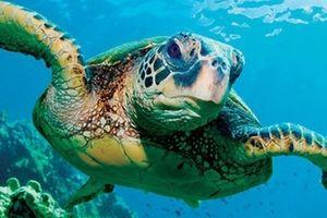 Giải cứu 16 cá thể rùa biển bị nuôi nhốt trái phép ở Phú Quốc