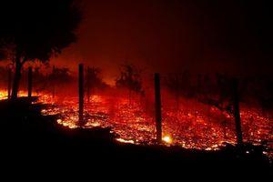 Cháy rừng ở California (Mỹ) làm ít nhất 42 người thiệt mạng