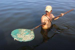 Quảng Nam: Hơn 10 vạn con tôm chết trắng hồ, nghi bị đầu độc