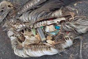 Ô nhiễm rác thải nhựa hủy hoại sinh vật biển