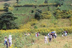 Thêm một mùa Lễ hội hoa dã quỳ-Núi lửa Chư Đang Ya với sức hút 'khủng'