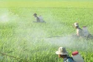 Việt Nam chi gần 368 triệu USD nhập thuốc trừ sâu từ Trung Quốc