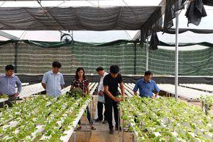 'Bỏ' bằng đại học về quê trồng rau sạch công nghệ cao đầu tiên ở Tuyên Quang