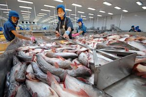 Xuất khẩu cá tra 2018 sẽ đạt kỷ lục 2,1-2,2 tỷ USD