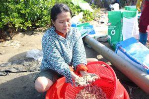 Bàng hoàng sau một đêm gần 1 triệu con tôm trong 3 ao nuôi bị chết sạch