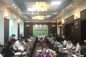 XTTM doanh nghiệp gạo 2 tỉnh Long An - Quảng Châu