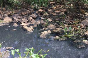 Xử phạt 66 triệu đồng đối với công ty Fococev Quảng Bình vì xả nước thải ra môi trường