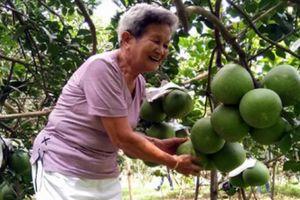 Bỏ lúa trồng cây ăn trái, 'một bước lên tiên' bỏ túi cả tỷ đồng
