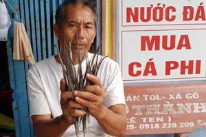 Sở NNPTNT Cà Mau thông tin về thương lái Trung Quốc mua cá lìm kìm