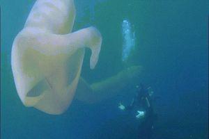 Giun biển khổng lồ