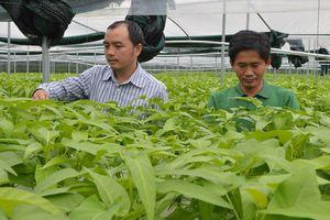 Phát triển nông nghiệp đô thị ở huyện Củ Chi