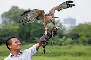 Thú chơi chim đại bàng của đại gia Việt tốn kém thế nào?