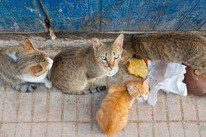 Khách du lịch tử vong tại Moroco do bị mèo cắn