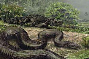 Quái vật rắn khổng lồ Titanoboa vẫn còn sống ở rừng Amazon?