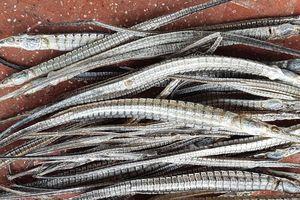 Thông tin mới vụ thương lái 'bí ẩn' mua cá lìm kìm với giá vài triệu/kg
