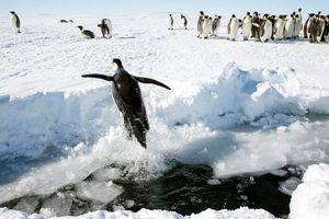 13 sự thật thú vị về Nam Cực