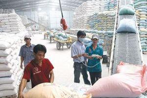 Xuất khẩu 10 tháng năm 2018: Gạo nếp 'lép vế' trước gạo tẻ