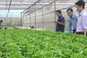 Sản xuất nông nghiệp sạch phục vụ đô thị